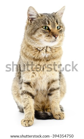 Gray striped cat isolated on white background - stock photo