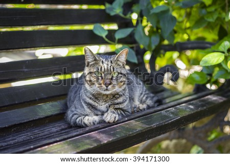 Gray striped cat looking intently from the bench - stock photo