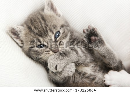 gray tabby baby cat lying on a white blanket