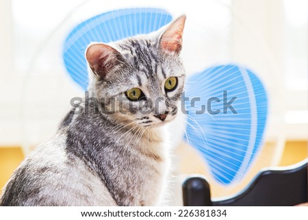 gray tabby cat Background to the fan - stock photo