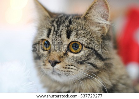 Gray tabby cat. Close portrait on the background of Christmas decorations.