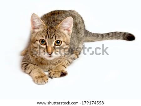 Gray tabby kitten on a white background. - stock photo