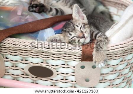 gray tabby kitten sleeping in a basket  - stock photo
