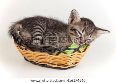 gray tabby kitten sleeping in a little basket on white background - stock photo