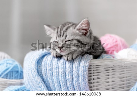 Gray tabby kitten sleeps in a basket with balls of yarn - stock photo