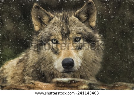 Gray Wolf in a Snow Storm