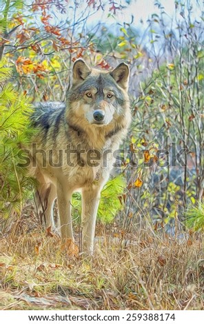 Gray wolf staring from forest - stock photo