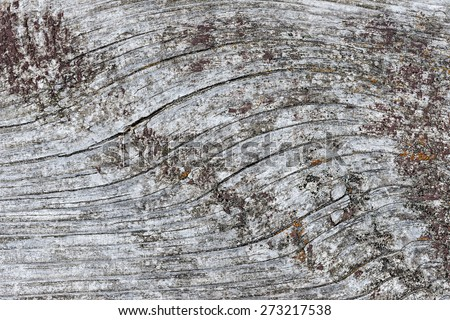 Gray wooden background of weathered distressed unpainted rustic wood showing woodgrain texture and lichens - stock photo