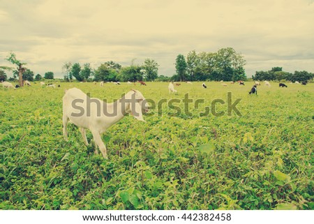 Grazing goats and green plants.vintage style with copy space.