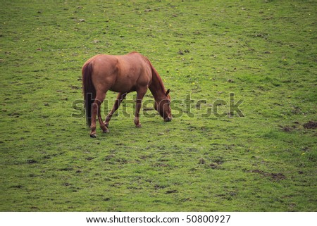 Grazing horse in a field. - stock photo