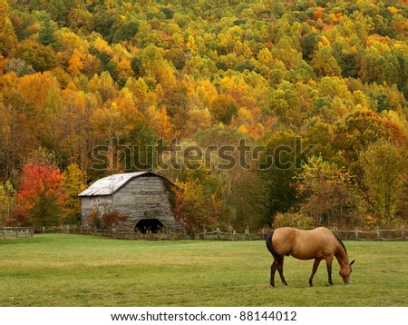 grazing horse in autumn - stock photo