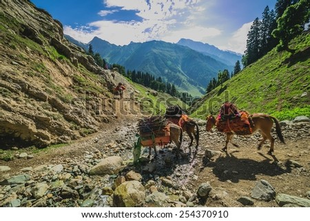 Grazing Horse in the mountains - stock photo