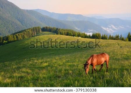 Grazing horse on mountain pasture. Beautiful morning landscape. - stock photo