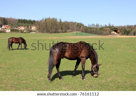 Grazing Horses on the green Field - stock photo