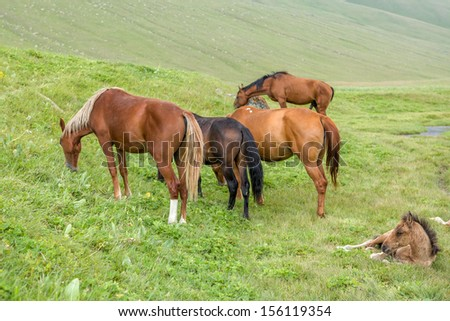 Grazing horses with foal on the field - stock photo
