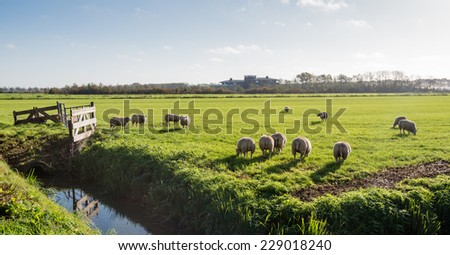 Grazing sheep in low sunlight on a beautiful day in autumn. - stock photo