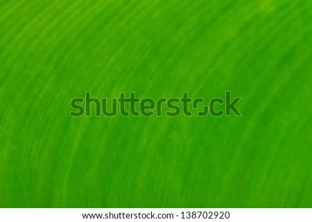 Grean leaf texture for background