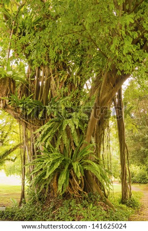 great banyan tree with a lot of different plant grows on it's roots
