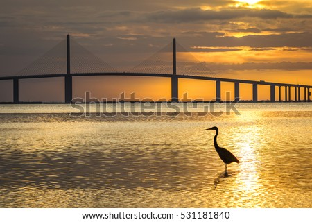 Great Blue Heron silhouetted at sunrise with the Sunshine Skyway Bridge in the background - Fort De Soto Park, St. Petersburg, Florida