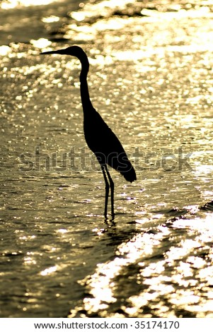 Great Blue Heron Standing in Silhouette in the Surf on Sanibel Island Beach - stock photo