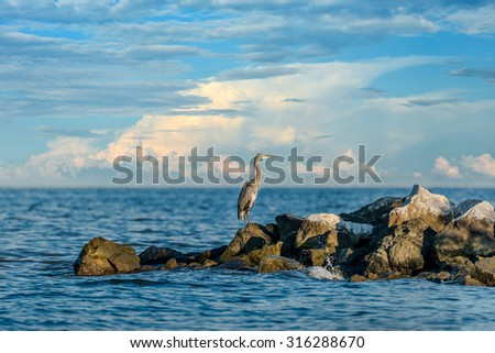 Great Blue Heron standing on a jetty over looking the Chesapeake Bay in Maryland - stock photo
