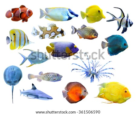 Great collection of a tropical fish on a white background - stock photo