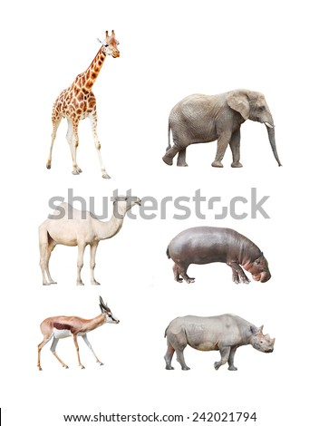 Great collection of big african mammals. - stock photo
