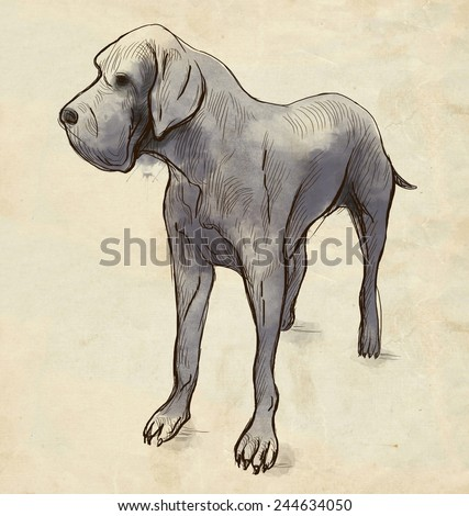 Great Dane (German Mastiff) - An hand drawn colored illustration. Description: Full sized hand drawn illustration drawing on old paper.