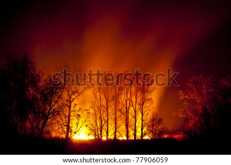 Great fire of forest fire during the night. - stock photo