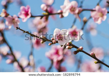 Great flower with amazing colors and great background - stock photo