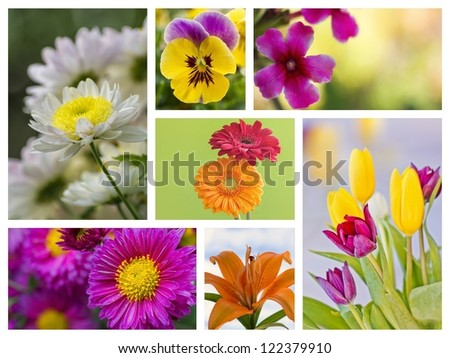 Great flowers collage with amazing colors and detail