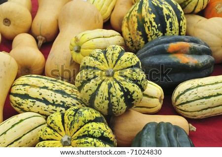 Great Gourds!