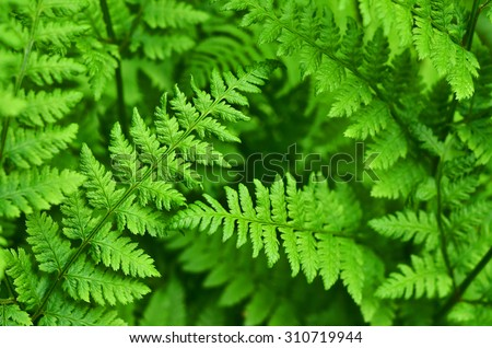 great green bush of fern in the forest - stock photo