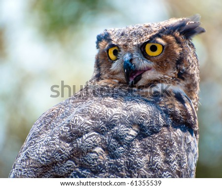 Great horned eagle owl - stock photo