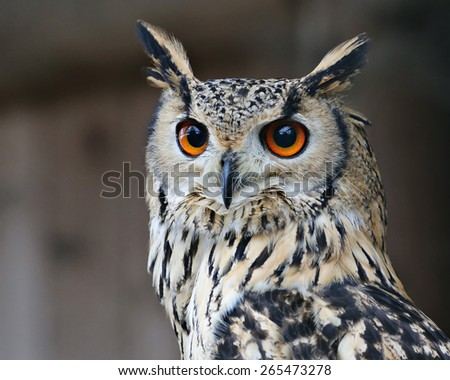great horned owl. - stock photo