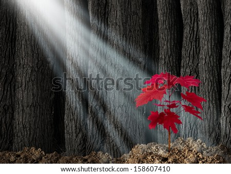 Great potential business metaphor with an old forest of trees and a young red leaf sapling emerging out of the ground as a symbol of future growth and hope for the future as an icon of investment. - stock photo