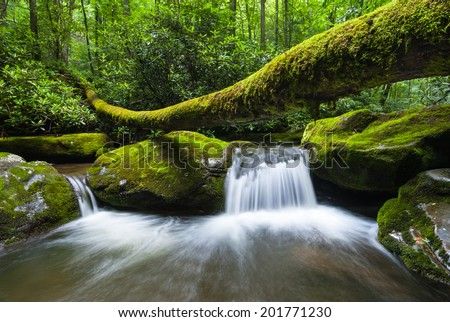 Great Smoky Mountains National Park Roaring Fork Motor Nature Trail Fallen Log Cascade - stock photo