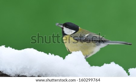 Great tit in snow. - stock photo