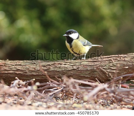 Great Tit on natural bird table in bright sunlight perched on log. - stock photo