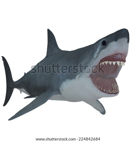 Great White Open Jaws - The Great White Shark is the largest predatory fish in the sea and can grow to 26 feet and live to 70 years. - stock photo
