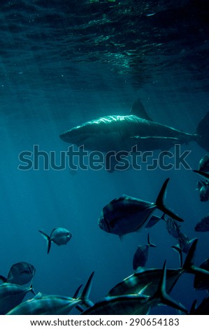 Great white shark and trevally