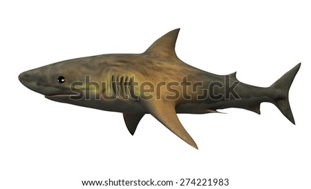 Great white shark, animal isolated on white background