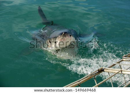 Great white shark by cage diving boat, South Africa - stock photo