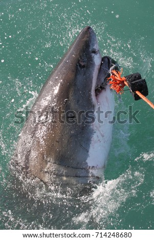 Shark bay hindu personals
