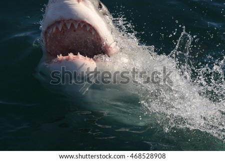 great white shark, Carcharodon carcharias, with mouth wide open, False Bay, South Africa, Atlantic Ocean