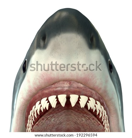 Great White Shark Jaws - The Great White Shark is the largest predatory fish in the sea and grows new teeth throughout its life. - stock photo