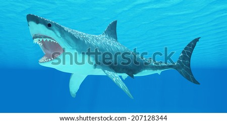 Great White Shark Underwater - The Great White Shark can live for more than 70 years and reach a length of 8 meters or 26 feet. - stock photo