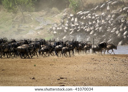 Great Wildebeest Migration - stock photo