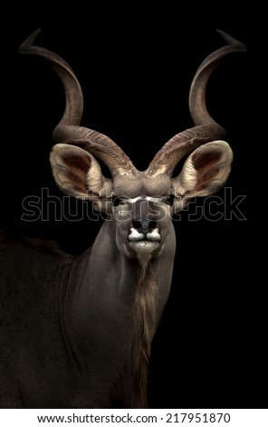 greater gudu standing in the dark night - stock photo