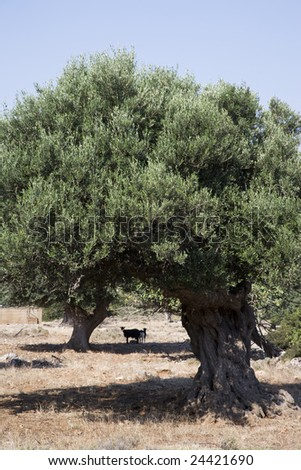 Greece. Crete. - stock photo